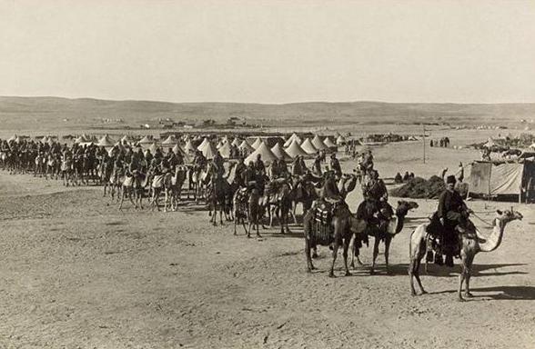 شترهایی که به جنگ تانک رفتند+عکس