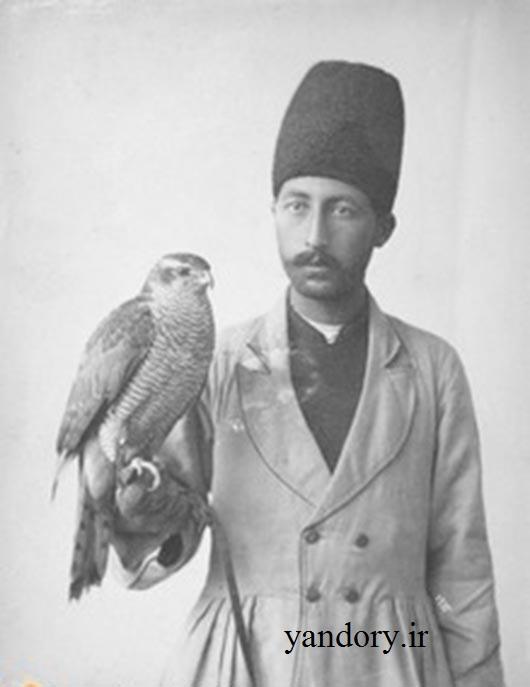 شاهین ایرانی/ عکس