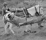 آمبولاس زمان جنگ/عکس