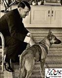 سگ مورد علاقه هیتلر/عکس
