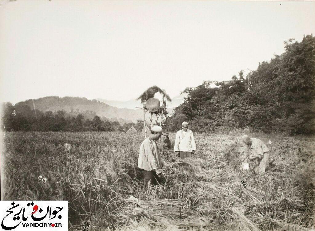 کشاورزی در دوره قاجار/عکس