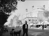 مردی باگوسفندانش در خیابانهای طهران