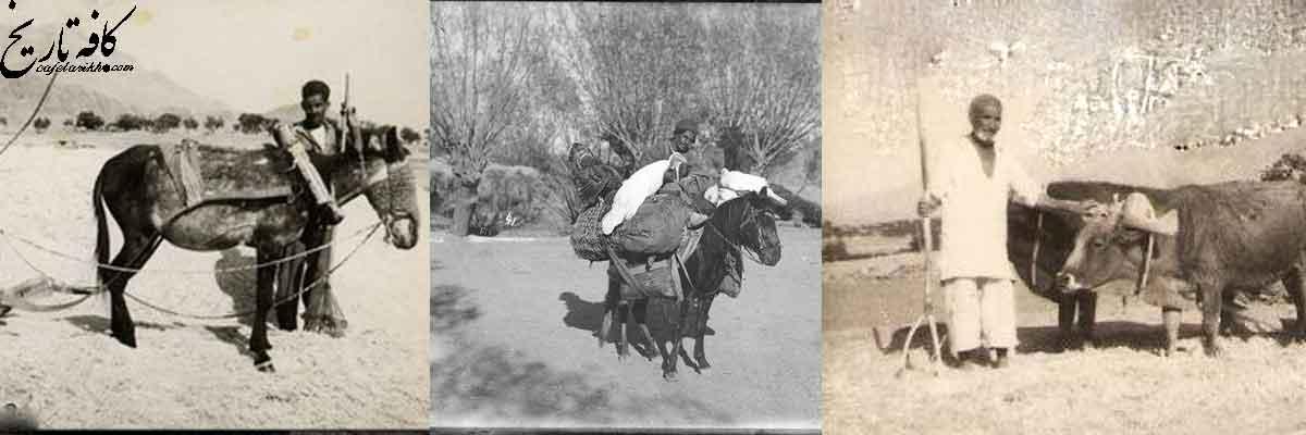 حکایت تلخ تلاش استعمار برای تغییر سبک کشاورزی ایران